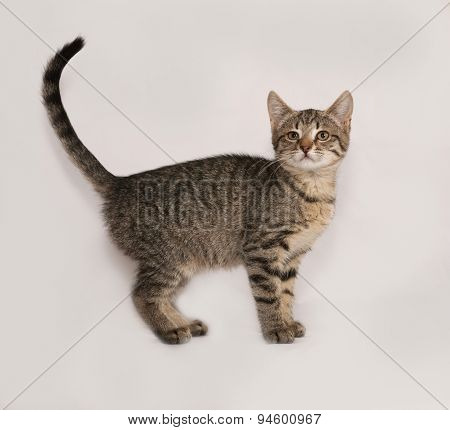 Striped Kitten Standing On Gray