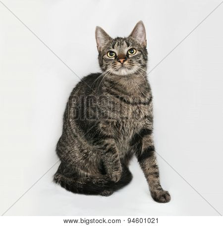 Striped Cat Sits On Gray