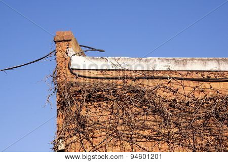 Cable And Dry Creeper On Side Of Red Brick Building