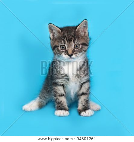 Little Tabby And White Kitten Going On Blue