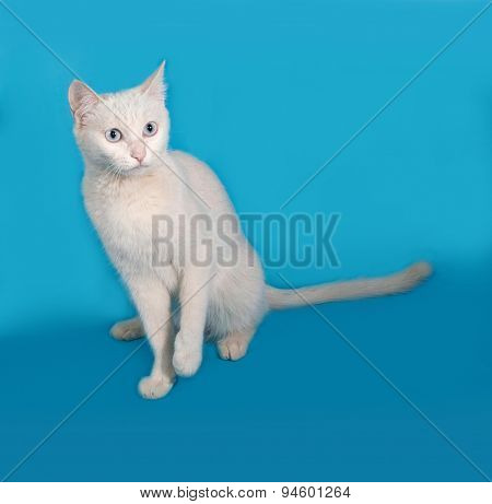 White Cat With Blue Eyes Sitting On Blue