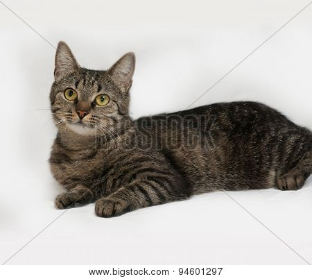 Gray Striped Cat Lies On Gray