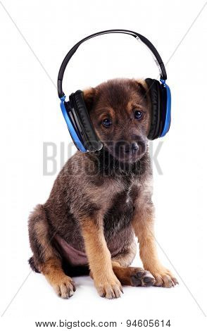 Funny puppy with headphones isolated on white