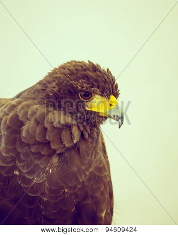 Golden Eagle ( Filtered image processed vintage effect. )