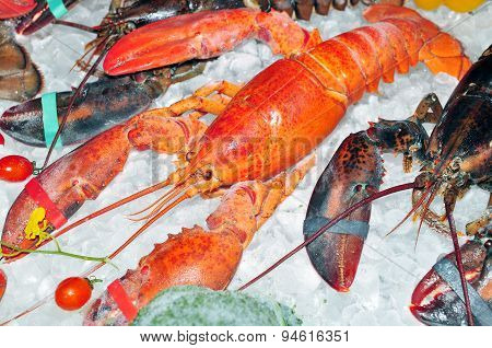 Frozen lobster on ice for sale at the market