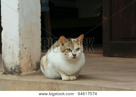 A cat is waiting in front of a Vietnamese house