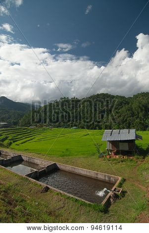 Terrace rice fields in Mae Chaem District Chiang Mai, Thailand