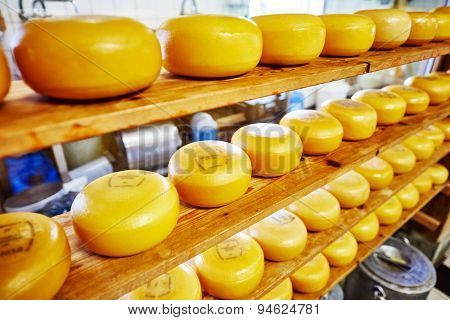 Cheese wheels on the shelves in diary production factory
