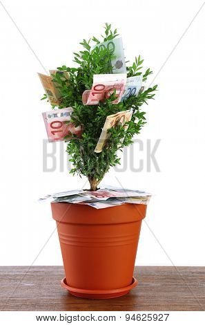 Decorative tree in pot with money on table isolated on white