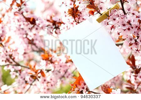 Blank card hanging on tree outdoors