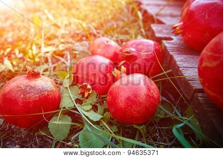 pomegranates on a green grass background