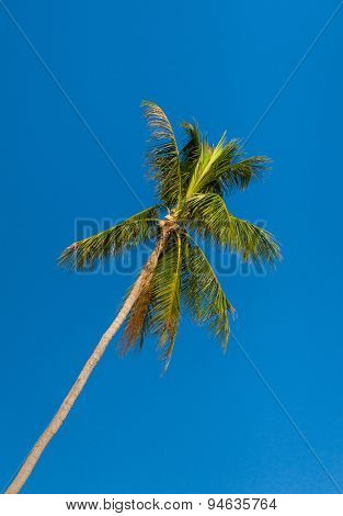 Palm Overhead High Tree