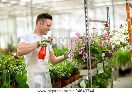 Worker watering flowers with hand sprayer in greenhouse