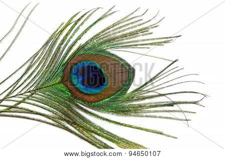 Peacock Feather On A White Background