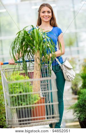 The customer pushing the trolley between the rows of plants.