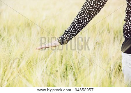 Woman Walks In Wheat Field And Touches The Wheat Cobs