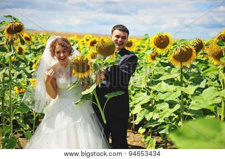 Newlyweds At The Field Of Sunflowers