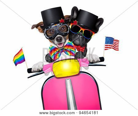 Gay Marriage Dogs