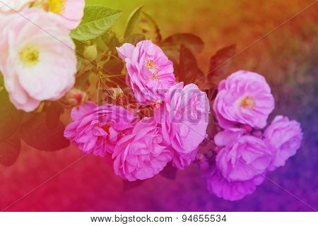 a colorful sparking flowers fields background