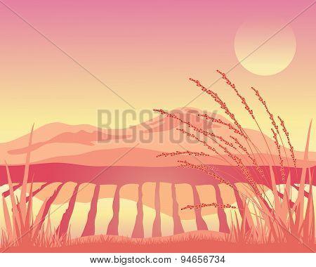 Sunset Paddy Fields