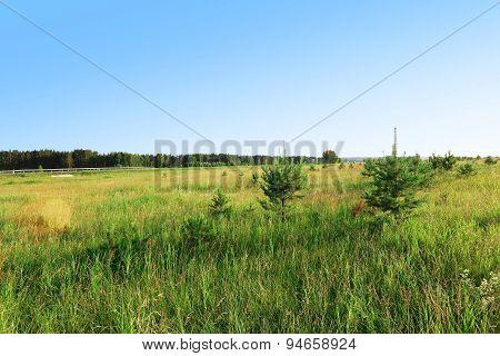 Summer field of grass