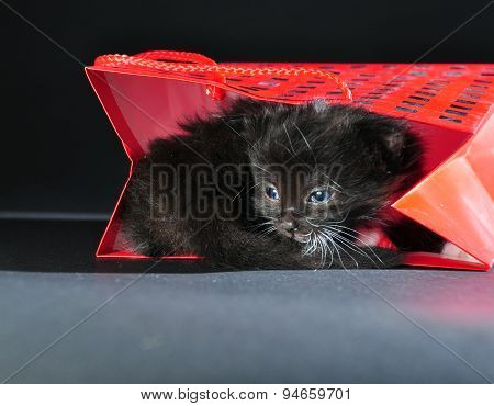 Black Kitten In Red Gist Bag