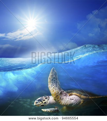 Turtle Swimming Under Clear Sea Blue Water With Sun Shining On Sky Above Use For Ocean Nature Backgr
