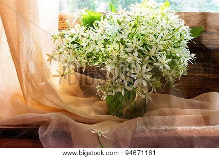Still Life Bunch Small White Florets Window