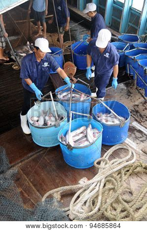 Tien Giang, Vietnam - August 30, 2012: Pangasius Catfish Is Being Tranfered From The Main Boat To Th