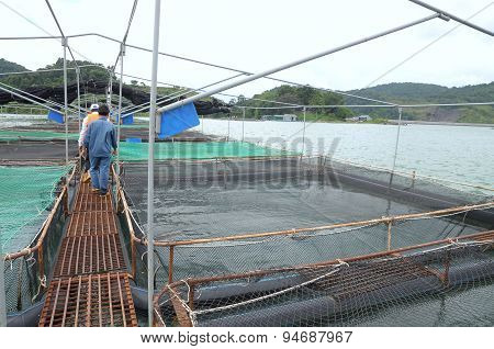 Lam Dong, Vietnam - September 2, 2012:  Cage Culture Of Sturgeon Fish In Tuyen Lam Lake. Several Spe