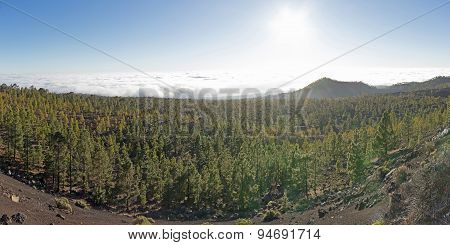 forest mountain landscape panorama - summer