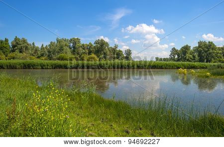 Wild flowers along a lake in summer
