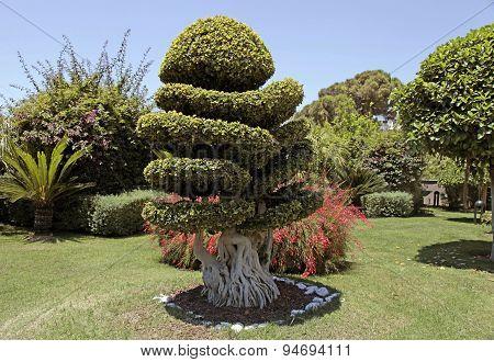 Beautiful Natural Bonsai Tree In The Garden