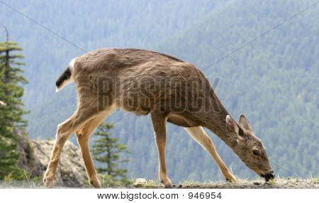 Deer_001