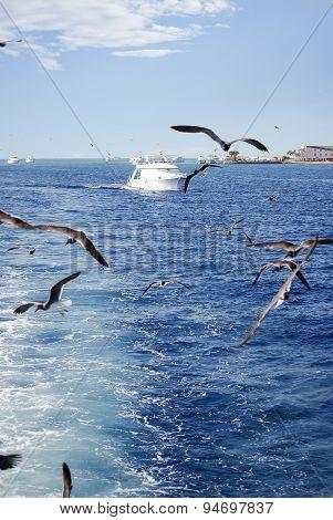 Seagulls Flying And Big Ship