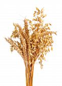image of oats  - oats and wheat isolated on white background - JPG
