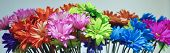 stock photo of gerbera daisy  - A Gorgeous Arrangement of Colorful Gerbera Daisy Flowers - JPG