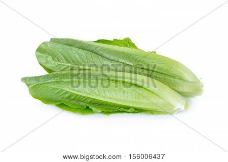 fresh Cos Lettuce on a white background