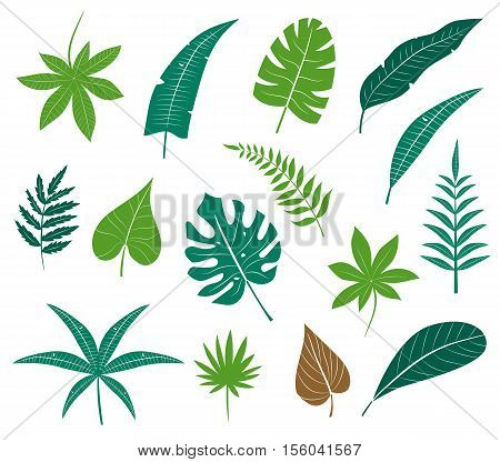Vector icon set different plants, palm leaves, isolated on white background. Leaf collection vector silhouette. Tropical leaves collection. Flat leafs. Natural green tropical set leaves.
