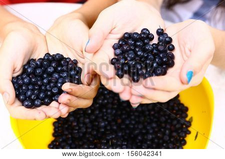 kids hands holding tasty ripe bilberries close up