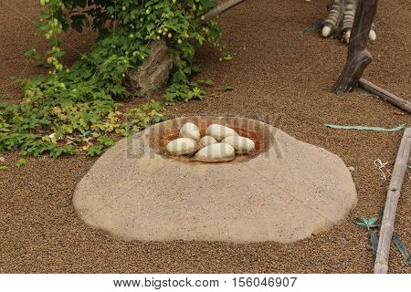 Nest with dinosaur eggs/This is a model of nest with dinosaur eggs.