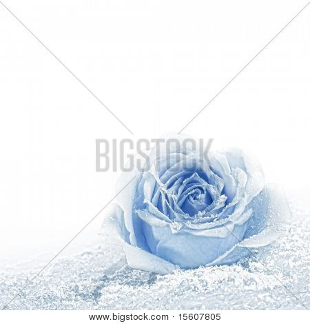 Blue rose covered with snow. Space for text.