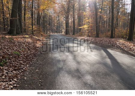 The photo shows the asphalt road. On the roadside growing beech forest. It is autumn, the trees are few, brown and yellow leaves. Earth cover a thick layer of dry leaves. It's a sunny day.