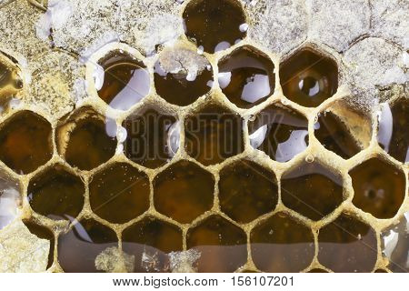 Honeycombs filled with honey closeup. In each cell of honeycomb the reflection of light in the form of an asterisk. Texture.