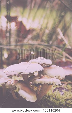 Close Up Of Toadstools Growing On The Woodland Floor Vintage Retro Filter.