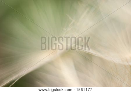 Abstract1-Dandelion