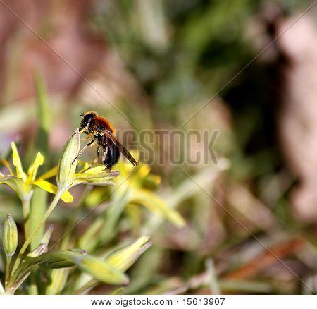 Beebreakfast