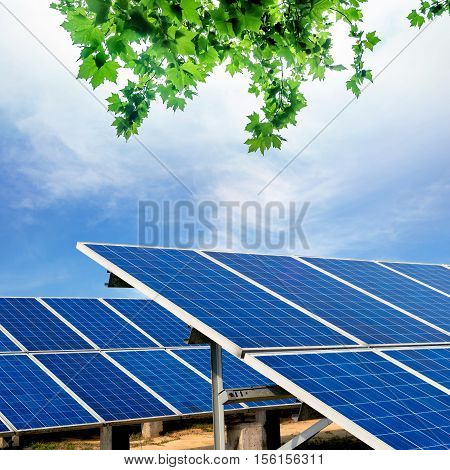 Against the blue sky of the solar panels.