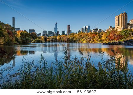 Fall in Central Park at The Lake with Midtown Manhattan skyscrapers. Cityscape sunrise view with colorful Autumn foliage. Manhattan, New York City