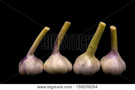 Garlic,a strong-smelling pungent-tasting bulb,  bulb, garlic on the black, bulb on the black, garlic health benefits, benefits of garlic , organic garlic, garlic vitamins , raw garlic benefits